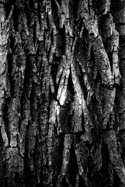 Aaron_Graybill_photography_merion_botanical_garden_spring_2021_tree_bark