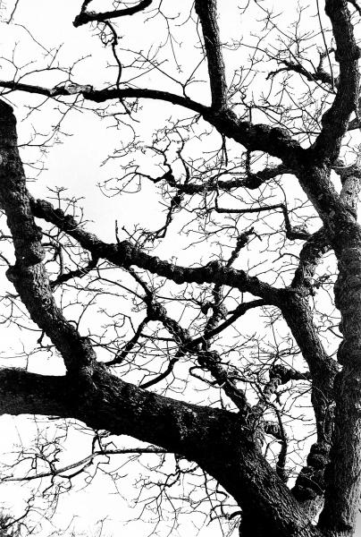 Aaron_Graybill_photography_merion_botanical_garden_spring_2021_tree_leafless