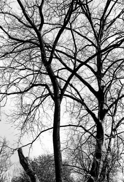 Aaron_Graybill_photography_merion_botanical_garden_spring_2021_trees