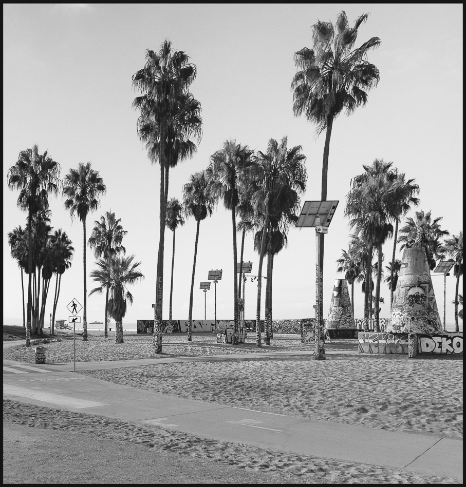 Ed_Simmons_Venice_Beach_Trashed_Tony_Ward_Studio_exclusive_documentary_palm_trees